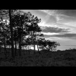 Coucher de soleil dans les pins