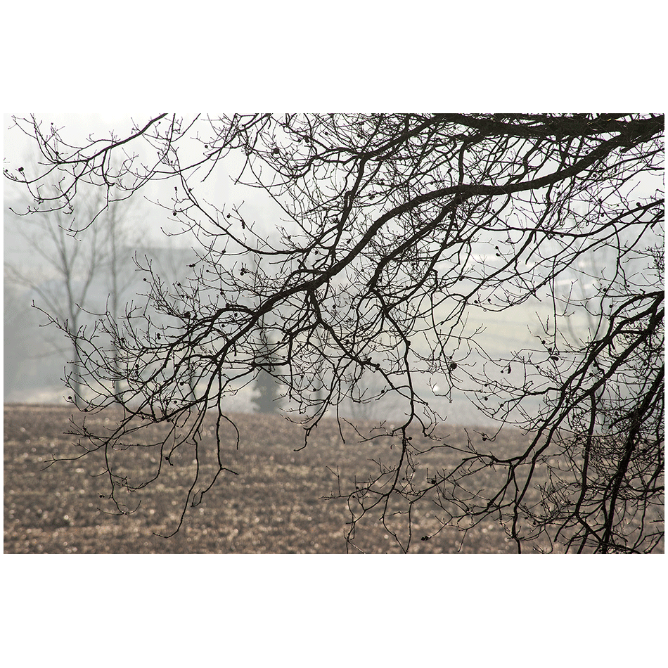 Dans la brume d'automne 09