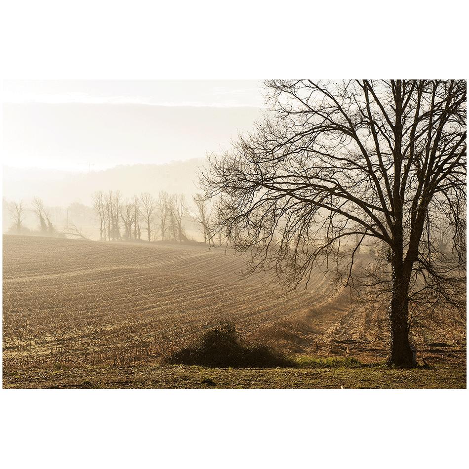 Dans la brume d'automne 01