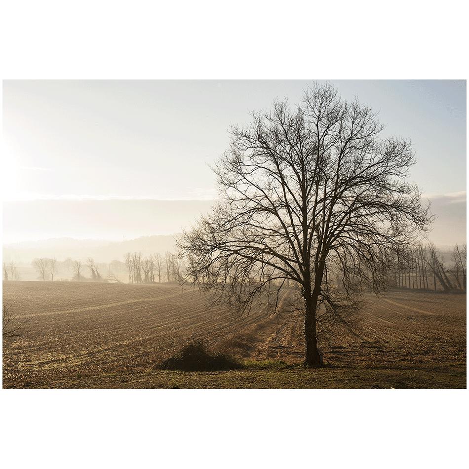 Dans la brume d'automne 02