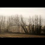 Dans la brume d'automne 05
