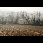 Dans la brume d'automne 06