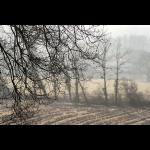 Dans la brume d'automne 08